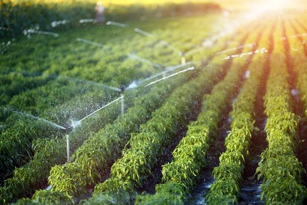 comment économiser l eau au niveau de l agriculture
